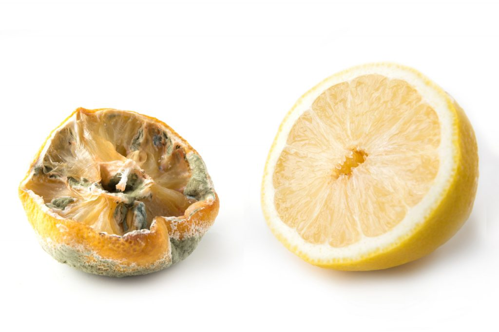 Ugly lemon with mold and fresh half lemon on white background.