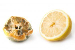 Ugly lemon with mold and fresh half lemon on white background.